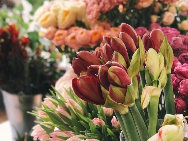Tulipány a jiné květiny